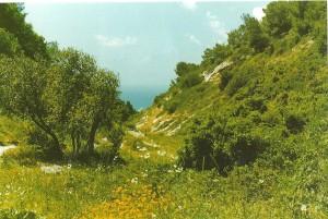 sur le Mont Carmel